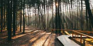 Танцующий лес, необычная экскурсия