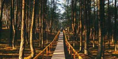 "Экскурсия ""Куршская коса - край рыбаков, дюн и сосновых лесов"". Куршская коса - танцующий лес, экскурсия"