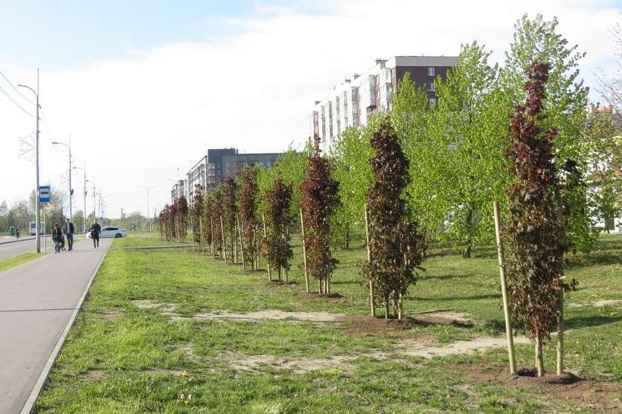 Экологическая обстановка в Ленинградском районе