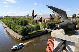 Программа тура для переезжающих - обзорная экскурсия по Калининграду
